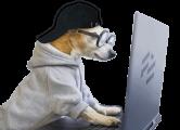 chien stream-ordi_min